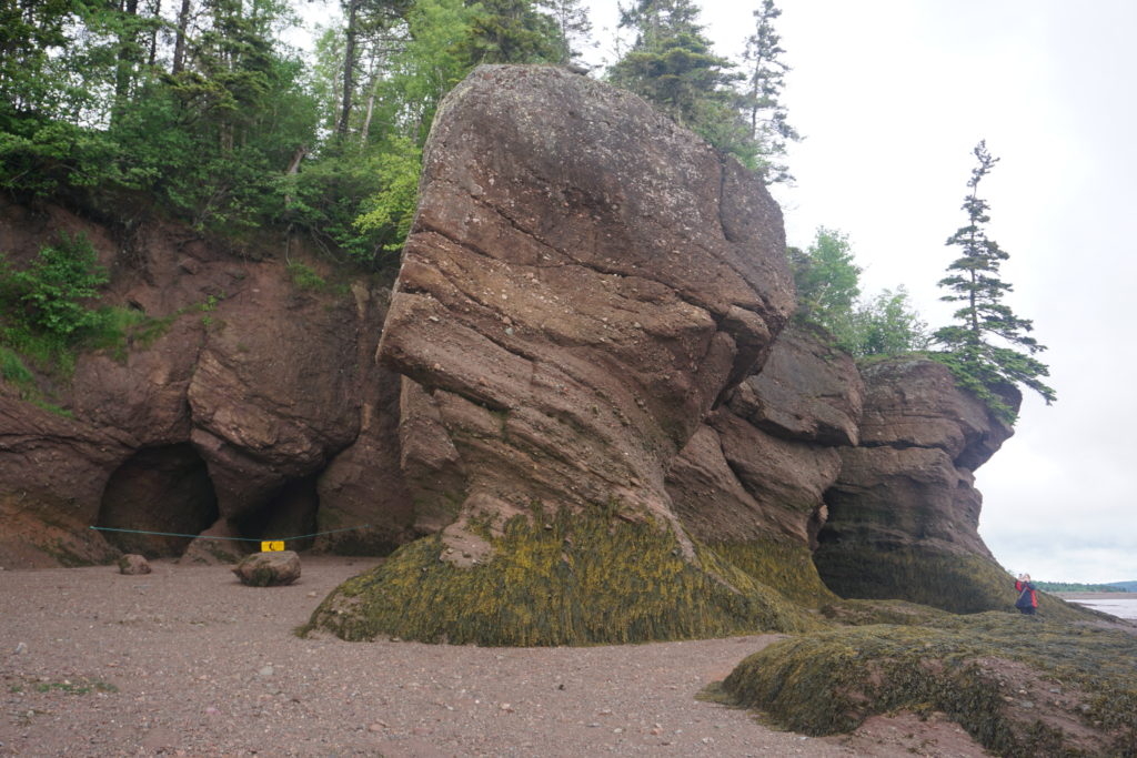 Hopewell Rocks, Ocean floor